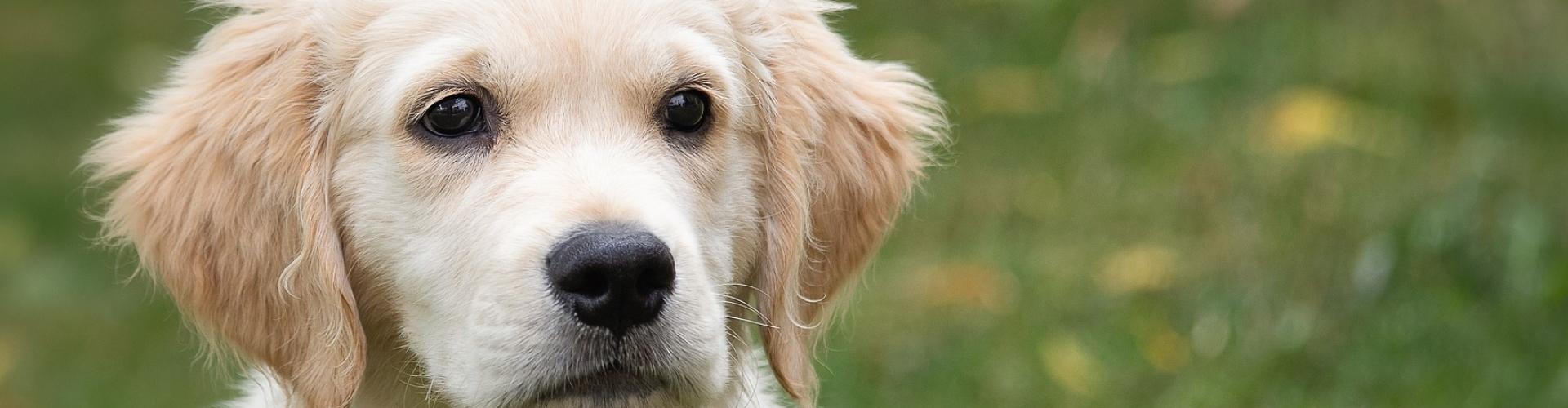 puppy hoofdje