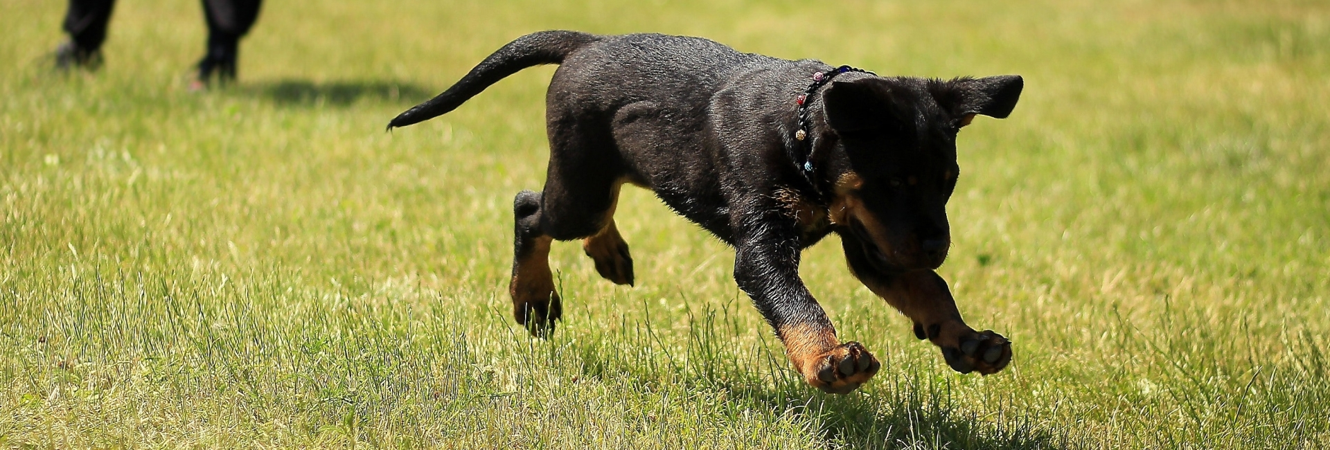rennende hondje