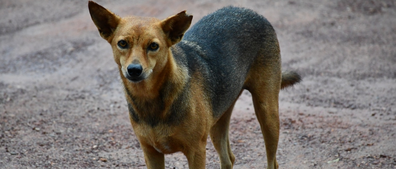 Hulp voor een hond die angstig is voor onbekende mannen