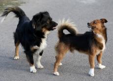 twee honden achter elkaar