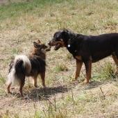 twee honden buiten