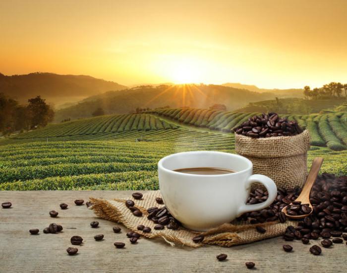 Biologische Koffie kopen