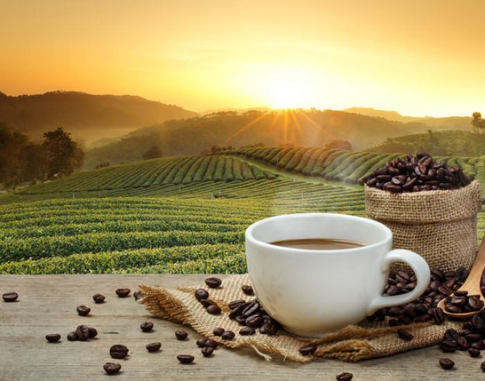 Biologische koffiebonen