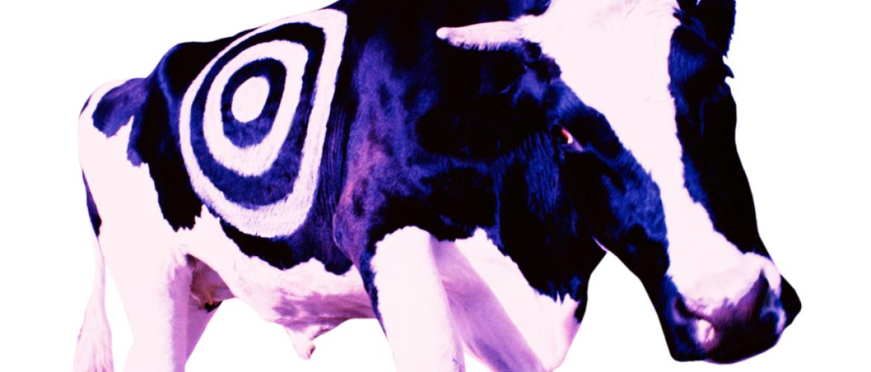 Gratis PR: €125.000 free publicity gecreëerd met een ware Purple Cow