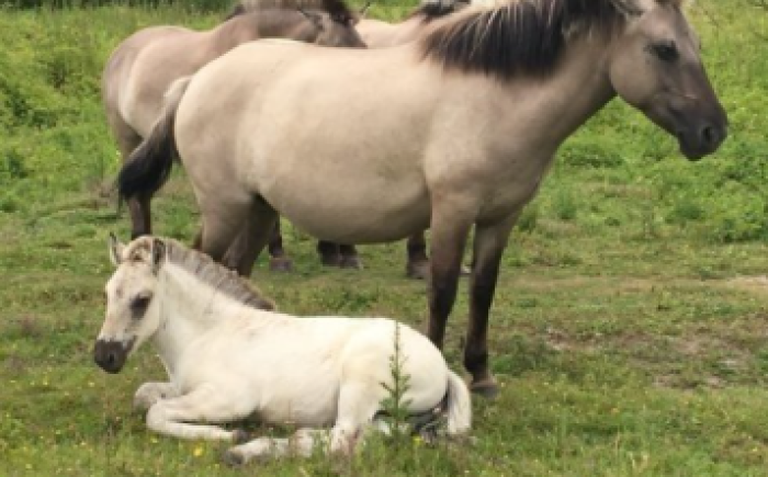 paardenfluister 3daagse