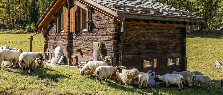 Voordelen van een Oostenrijks dekbed en hoofdkussen met schapenwol en Zirben houtvlokken