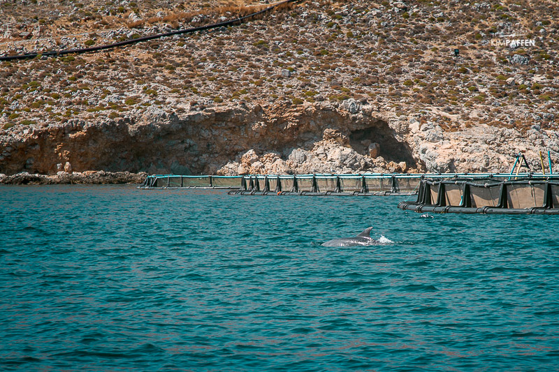 Seeing dolphins on a boat trip in Kos