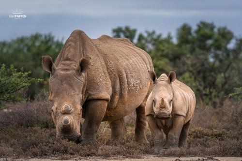 Spot the Big Five on a Safari Trip in South Africa