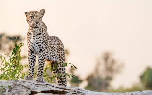 Botswana Travel: Okavango Delta African Safari