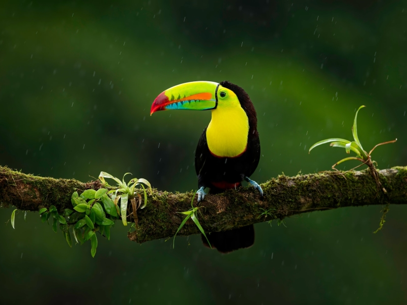Travel to Cosa Rica, Central America