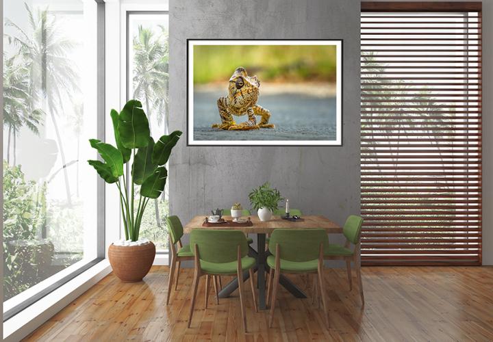 Fine art print of wildlife: Giant Malagasy Chameleon