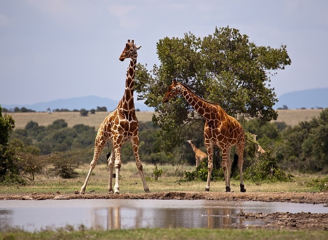 Travel Kenya: Samburu Game Reserve