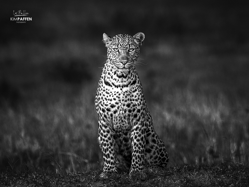 Leopard: one of the Big Five in Africa