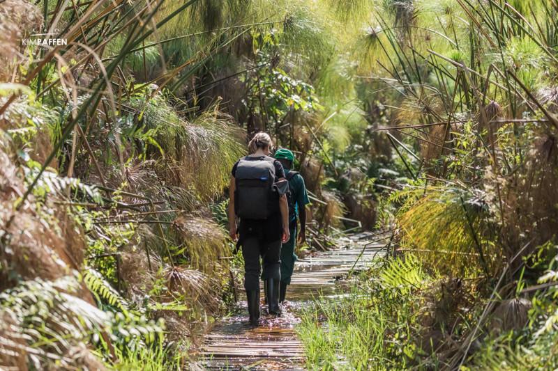 Bigodi Wetland Sanctuary protecting the Magombe Swamp