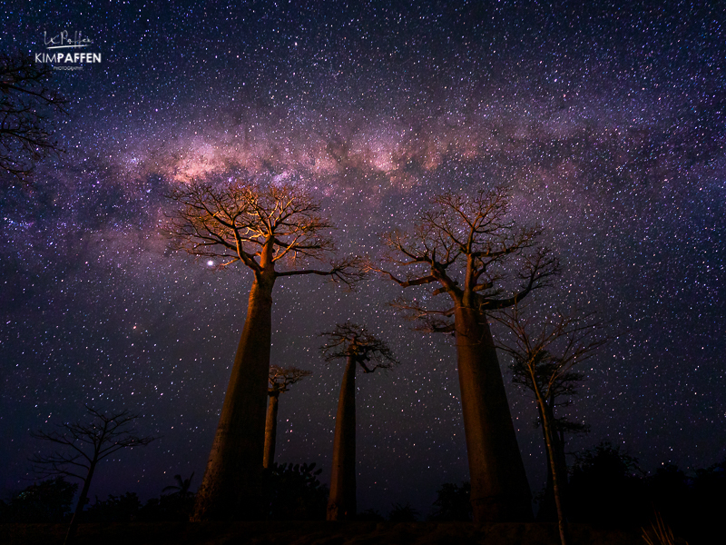 Photograph the Milky Way above the Baobabs on Avenue of the Baobabs, Madagascar