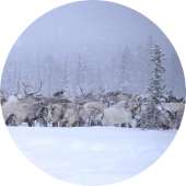 North Asia Travel: Northern Siberia