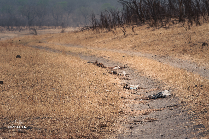 Plastic bags in Elephant dung in Zimbabwe: Planet or Plastic