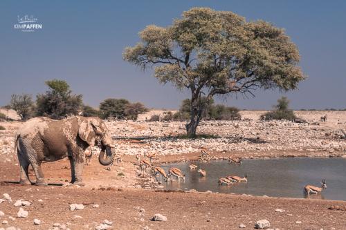 Safari in Etosha National Park Namibia