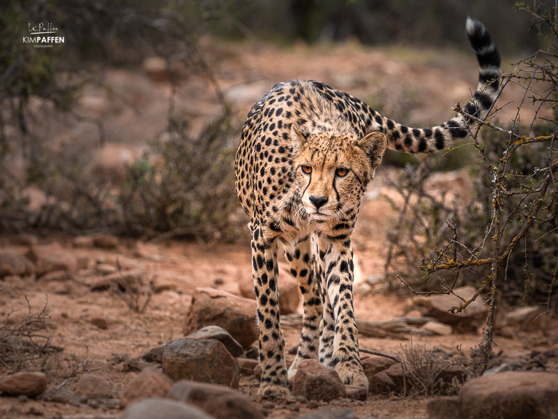 Safari trip in South Africa and wildlife viewing