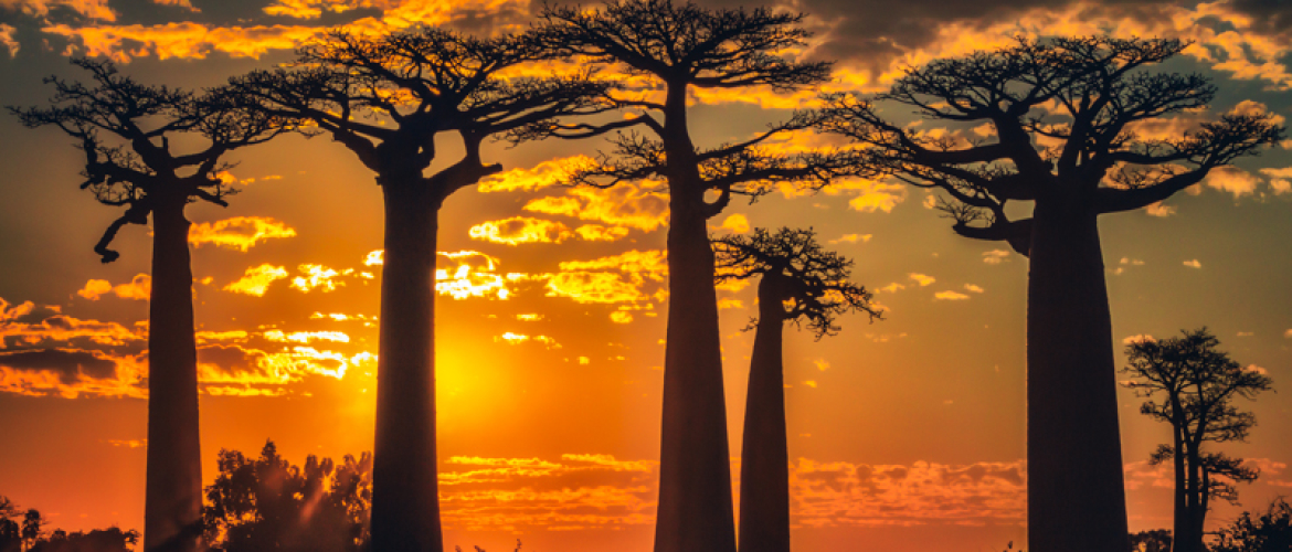 Finalist Africa Geographic Photographer of the Year
