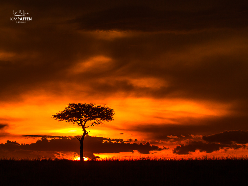 Typical orange African sunset with a silhouette of an Acacia tree