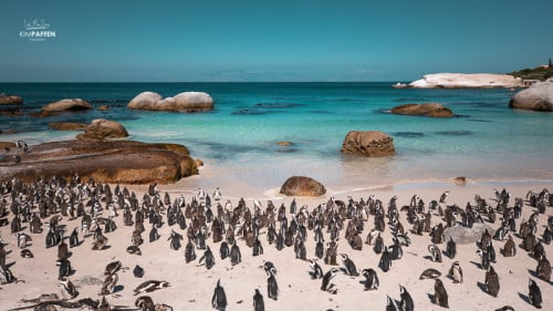 Visit Boulders Beach in Cape Town to watch penguins on the beach