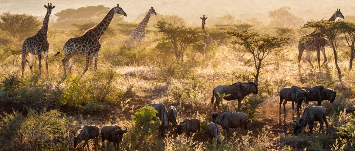 Behind the lens of creating the 'This is Africa' image