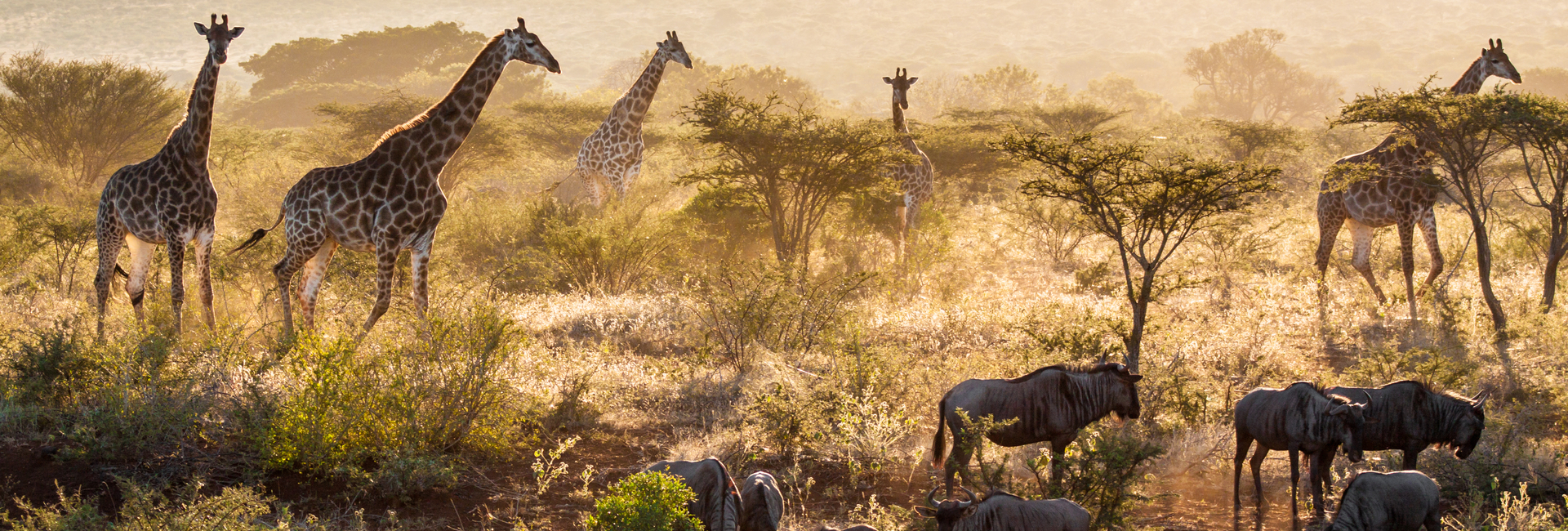 Travel to Africa to experience the true Africa feeling and its wildlife