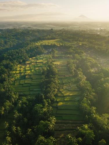 Ubud Bali Rice Fields Indonesia