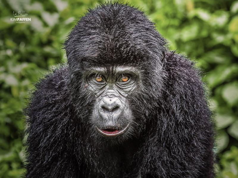 Uganda Wildlife Photography Africa