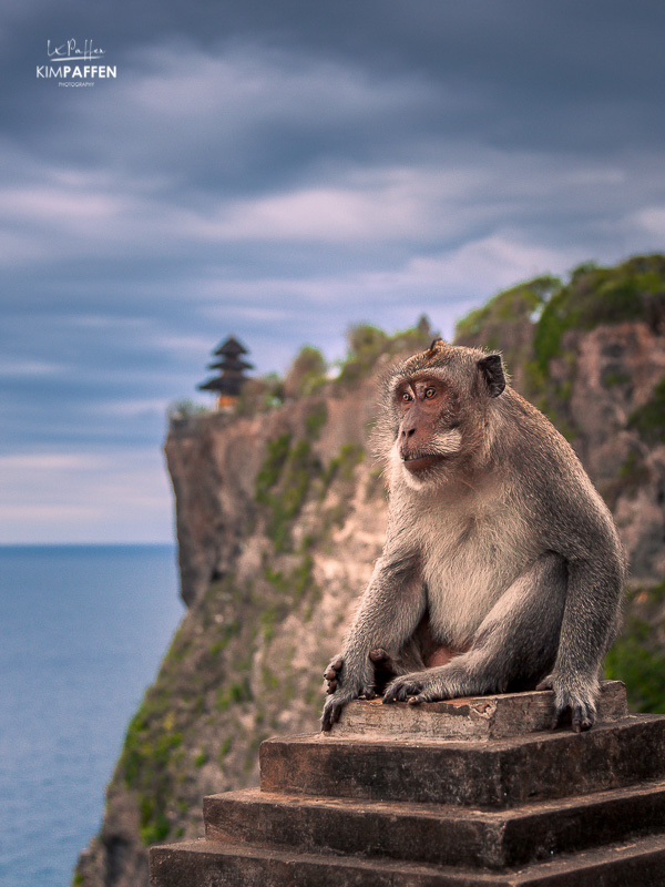 Uluwatu Temple in Bali, Indonesia with a monkey in front
