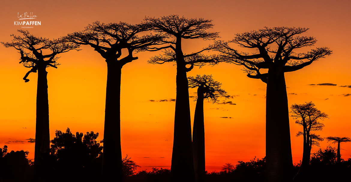Visit Avenue of the Baobabs in Morondava, Madagascar