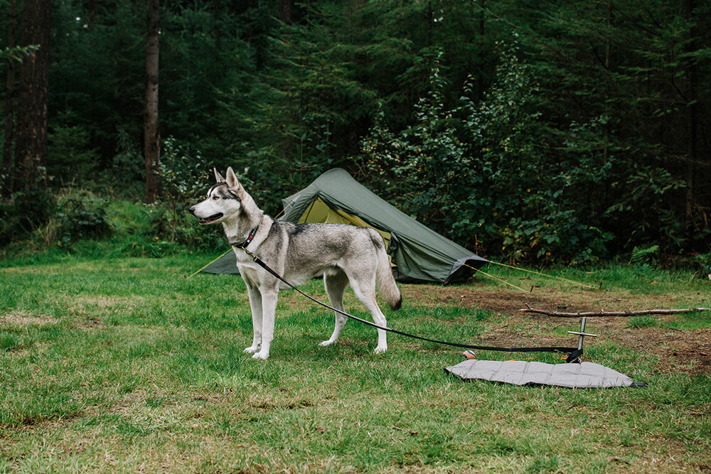 kamperen-borger-met-hond