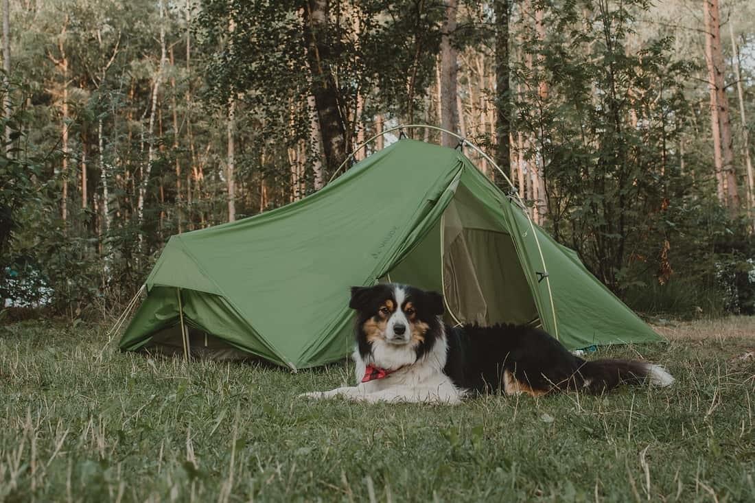 kamperen-met-hond-wat-meenemen