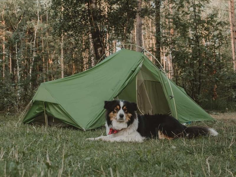 kamperen-met-hond