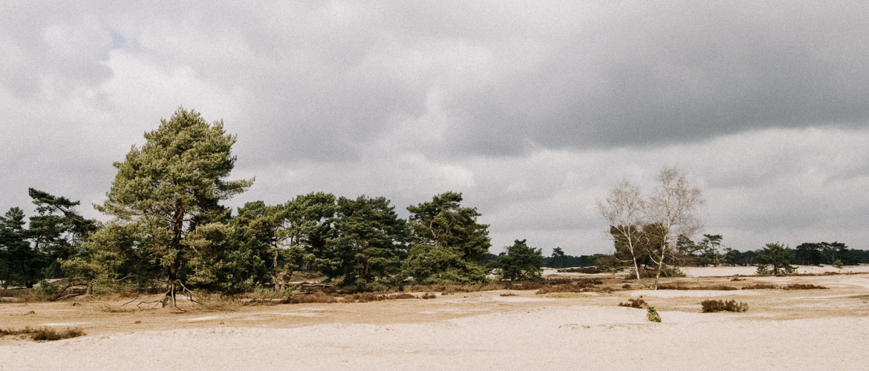 De Soesterduinen: dit zijn de mooiste wandelroutes