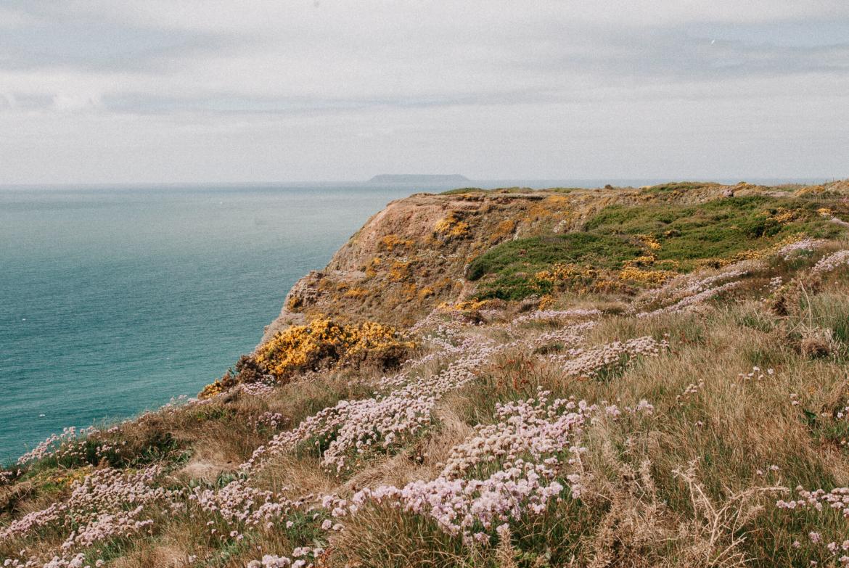 south-west-coast-path-bloemen