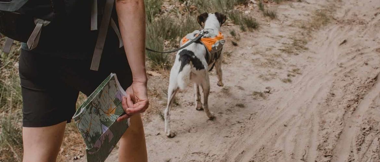Wat moet je meenemen op een trektocht met je hond?