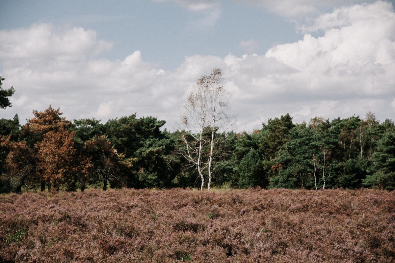 wandelen-maasduinen