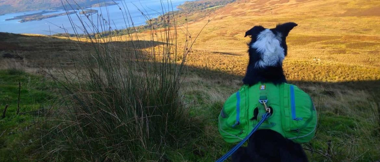 De West Highland Way wandelen met de hond? Tips en tricks!