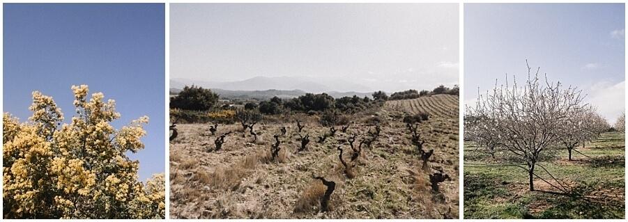 wijngaarden-frankrijk