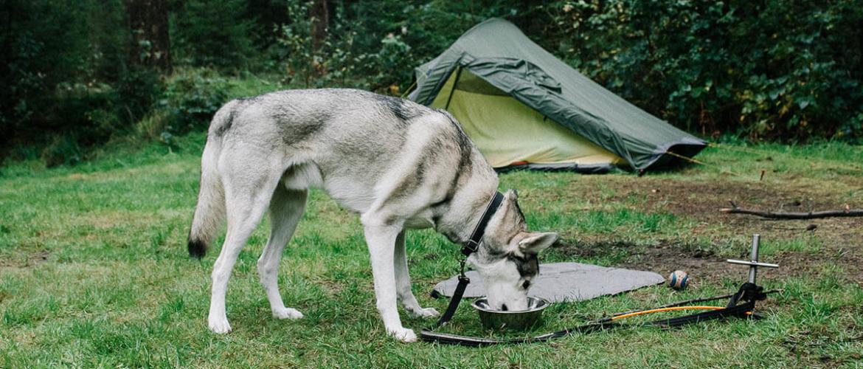 Wildkamperen in België? Dit zijn de regels
