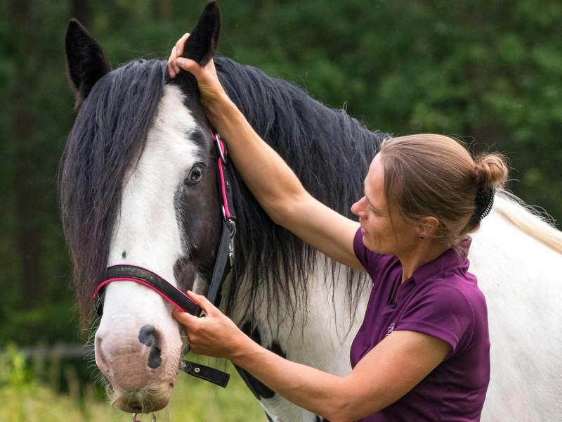 Cranio sacraal bij paard: Ear pull techniek