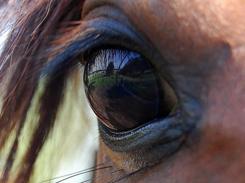 Oog van een bruin paard