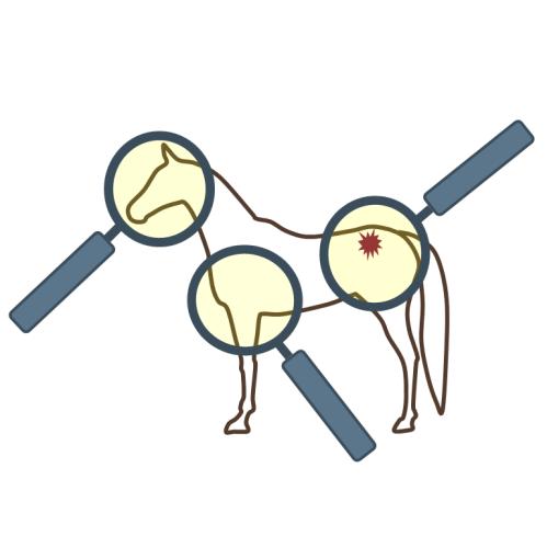Tekening van een paard met drie vergrootglazen