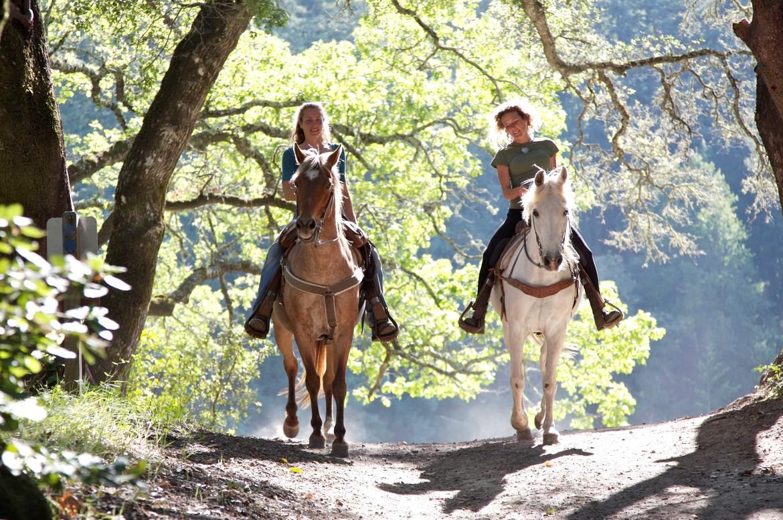 Twee ruiters op gezonde en vitale paarden in een bos