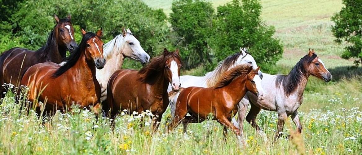 Is jouw paard gezond? 10 signalen dat je paard wat mankeert - Leer ze herkennen!