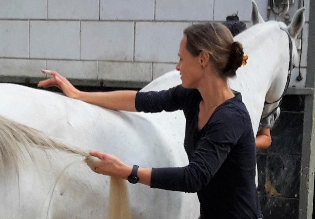 Wormen bij paarden vaststellen door een osteopaat
