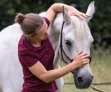 Osteopaat paard met witte arabier