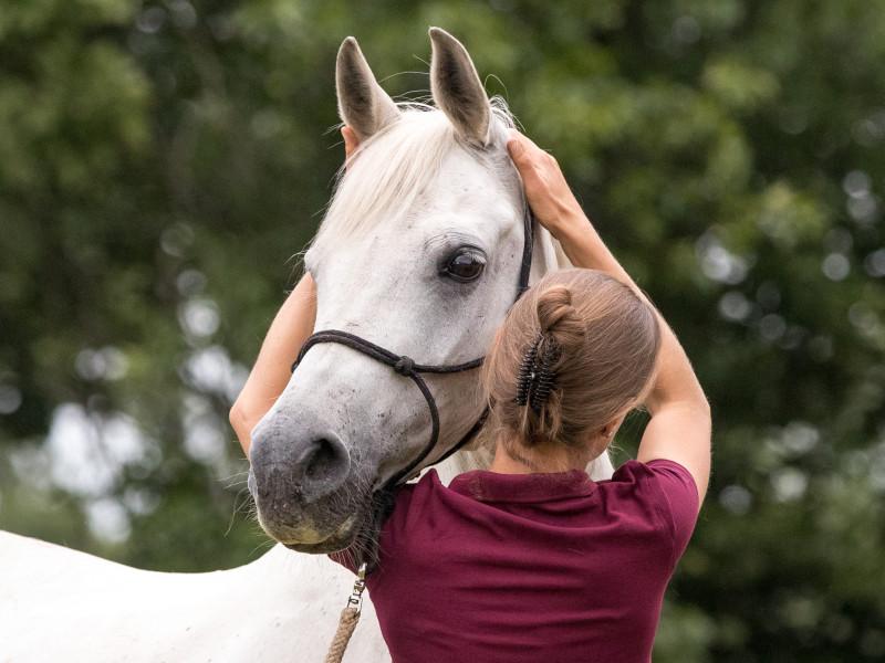 Cranio-sacrale behandeling van de craniale basis van een paard
